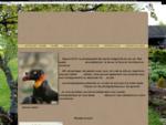 Photographies numériques  faune, flore, paysages, architectures, etc ...