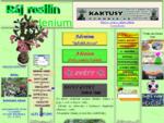 adenium pěstování, květy, thajské hybridy, druhy a variety , obrázky, nabídka rostlin do bytu a sem