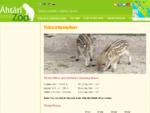 Siellä luonto kohtaa sinut - Ahtari Zoo | Ähtärin Eläinpuisto