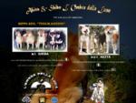 Allevamento L'Ombra della luna selezione di alta genealogia cani razza Akita e Shiba