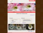Floristería Cáceres. Amarylis Arte Floral