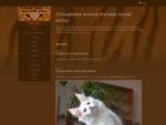 Chovatelskà¡ stanice Mainské mà½valà kočky