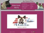 American Akita de GabriTho, Gabriele Thoma, meine Hunde, Deckrüden, Nachzucht, Welpen