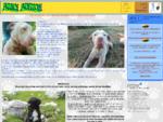 Amici Animali, animali domestici, Acquariofilia, Veterinaria, Pet Therapy, amicianimali, cane,