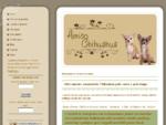 Allevamento chihuahua - Amicochihuahua