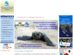Συλλόγος για την Προστασία της Θαλάσσιας Χελώνας, ΑΡΧΕΛΩΝ