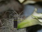 AS Flowers - Chur
