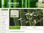 Bambuswald - Bambus und Pflanzen für Haus und Garten