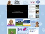 Dog Sitting | Dog Sitters | Pet Sitting | Dog Care | Barking Mad, UK