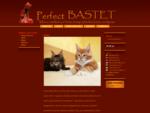 Meino meškėnų ir Britų trumpaplaukių kačių veislunas Perfect Bastet