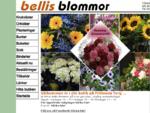 Bellis Blommor Gbg AB