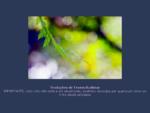 Buuha Dharma Sangha - Traduções de Textos Budistas