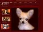 Chihuahua d Elite - Allevameno italiano di chihuahua