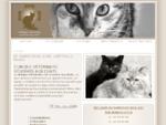 Clinique vétérinaire réservée aux chats