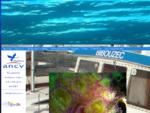 Etel plongée - CSBE - Club Subaquatique de la Barre d'Etel - Plongée sous marine ria Etel, Groix,
