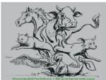Dierenartsenpraktijk Van Zeebroeck | Voor de medische zorg van kleine en grote dieren |
