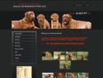 Pure Life - Domowa hodowla psów rasy Dogue de Bordeaux - Historia naszej hodowli
