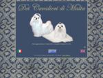 Maltesi Dei Cavalieri di Malta - Allevamento per la selezione del Maltese a Napoli