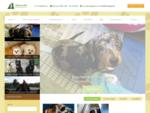 Дрессировка собак москва Школа для собак Джильда коррекция поведения воспитание щенка кинологи цен
