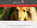 לימוד אילוף כלבים | קורס אילוף כלבים - המכללה למקצועות האילוף
