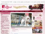 Ubranka dla psów | ubranka dla Yorków. Akcesoria dla psów - Doggie. pl