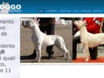 Dogo Argentino, Dogo del bianco manto, allevamento Dogo Argentino Bologna