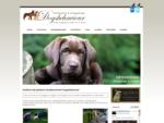 Hondenschool Dogsbehaviour, puppycursus, gevorderdencursus, gedragstherapie, priveles, den haag