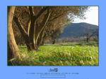 Domaine de l'Olivette - Roquebrune, Var, Provence, France - Huile d'olive, olives de table