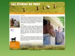 Les écuries de Pray débourage, pension, randonnées au cœur de la vallée de la Loire