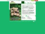 Gojenje gob šitak z eko certifikatom za proizvodnjo svežih gob šitak