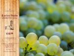 Azienda Vitivinicola - Enrico Dario - Bastia d Albenga