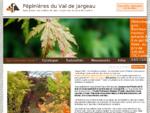 Pépinière du val de jargeau - Spécialité érable du Japon - ERABLE, HOUX, AZALEE, BRUYERES, ...