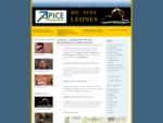 Webmaster Roma realizzazione siti, posizionamento motori di ricerca.