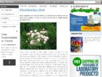 fioritorino. net