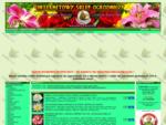 NAJTAŃSZE nasiona egzotycznych roślin, cebulki kwiatowe, storczyki Allegro FLORA-NET