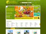 Szkółka LIMBA - Katalog drzew, krzewów i roślin ozdobnych, iglastych, liściastych, bylin, traw,