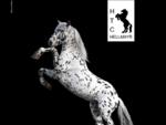 HTC Horse Training Center Hellmayr - Stadl-Paura - Österreich - Austria