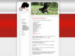 sanering byggesøknad boligsalgsrapport tilstandsrapport skadetaksering taksering takst mugghund sopp