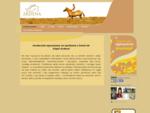 Stajnia Ardena, jazda konna wroclaw, konie wroclaw, nauka jazdy konnej wroclaw, galow konie, st