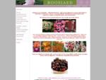 Garden. ee | Roosiaed