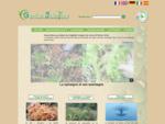 La sphaigne, solutions innovantes et développement durable - Garden Solutions
