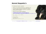 Kennel Geppetto's   villakoiran pentuja   koiran kasvatus   koiran koulutus