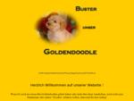 Buster, unser Goldendoodle, Beschreibung einer neuen Hunderasse