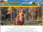Goldendorado - Allevamento cuccioli cane Golden Retriever