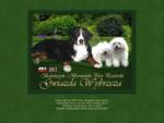 Berneński Pies Pasterski (Berneńczyk), Bolończyk - hodowla Gwiazda Wybrzeża