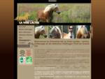 Haflinger | Elevage de chevaux Haflinger | Vente de chevaux Haflinger