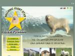 Σκύλος των Πυρηναίων και Σαρπλανίνατς – Hellenic Giant Star Great Pyrenees SARPLANINAC