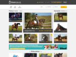 Heste til salg, stort udvalg i heste til salg