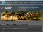 Paardentandarts (Equine Dentist) Bas Cornielje