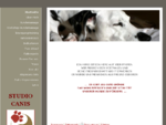 Ilse Mayer Salzburg Hundemassage Studio Canis - Ilse Mayer Studio Canis Salzburg Hundephysiotherapie